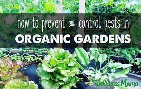 garden pest. How To Prevent And Control Pests In Organic Gardens Garden Pest
