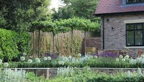 Corner Garden Design Unique Raised Beds With Alliums And Rooftrained Liquidambar Create An