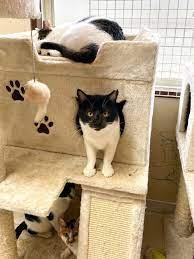 サンシャイン 池崎 猫 スマイル
