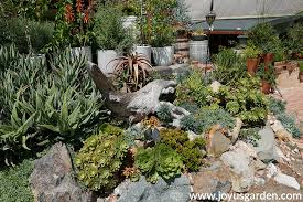how often should you water succulents