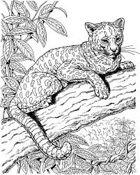 Small Picture Amazing Animal Jaguar Coloring Pages Bulk Color