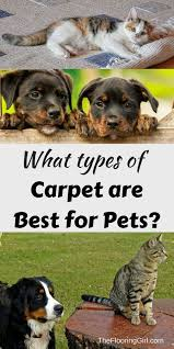 Small Picture Best 25 Types of carpet ideas on Pinterest Carpet types Living