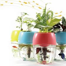 25 office desk plants aquaponic fish tanks