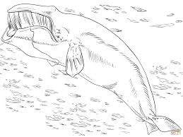 Small Picture Bowhead or Greenland Right Whale coloring page Free Printable
