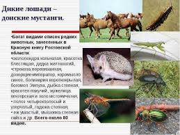 Животные красной книги ростовской области реферат проводящие пути  Животные красной книги ростовской области реферат