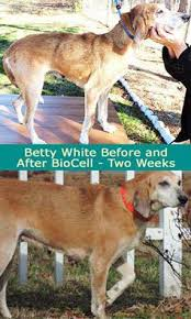 DOES YOUR DOG HAVE JOINT PAIN OR SKIN ISSUES? We... - Dogs Deserve Better