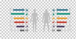 Body Scale Chart Human Body Chart Human Anatomy Homo Sapiens Body Structure