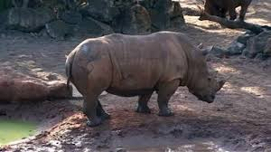 Florida Rhino Incident New Report Details Extent Of Girls