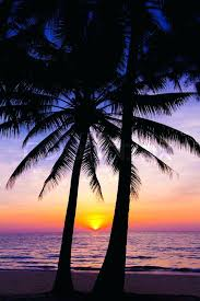 landscape with sunset sunset landscape beach sunset palm trees silhouette on sunset tropical beach beach sunset