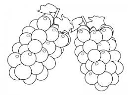 ぬりえ素材ぶどう葡萄マスカット果物 イラスト無料