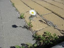 Resultado de imagem para imagem  florzinha na beira da calçada