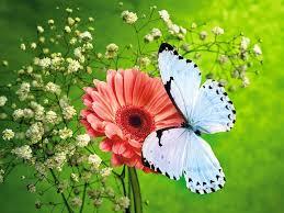 desktop wallpaper butterfly.  Desktop 3D Butterfly Desktop Backgrounds And Wallpaper