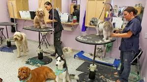 Petsmart Bather How Much Does Dog Grooming Cost Angies List