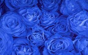 48+] Blue Rose Wallpaper for Desktop on ...
