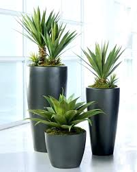 plant pot saucers large large indoor plant pots indoor plant pots with saucers extra large plant
