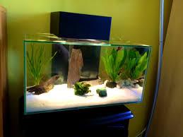 Fish Tank Coffee Table Uk Interior Pleasing Enchanting Modern Fish Tanks Pics Decoration