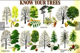 Tree Identification Chart Tree Identification Tree Identification Plants Plant