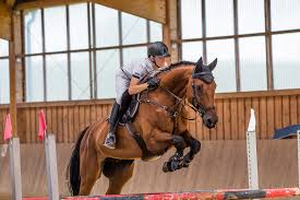 equine insurance quotes 6907613 seafoodnet info