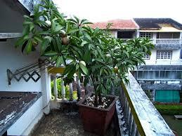 Peach Garden Sun Miniature Full Sun 810u0027 In Height 1999 Pots For Fruit Trees