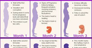 Morning Sickness Chart Pregnant Belly Chart Blackmores Pregnancy