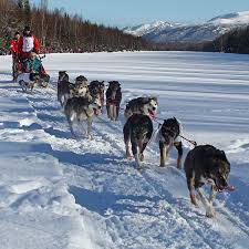 sled dog tours 3
