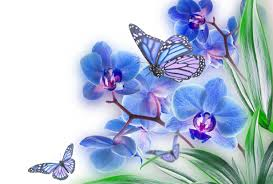 Butterflies And Flowers Wallpapers ...