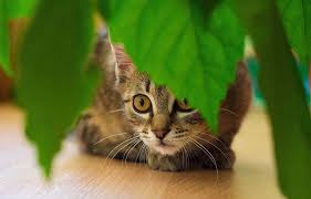 8 houseplants that are safe for cats