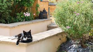 keep cats out of your lawn