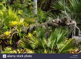 tropical rain forest garden san go botanic garden encinitas california