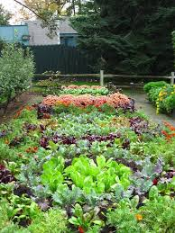 Small Picture 205 best Vegetable Gardening Ideas Organic DIY images on Pinterest