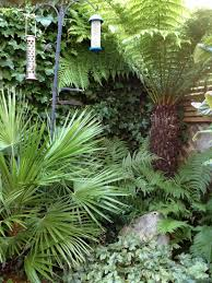 subtropical garden- evergreen tropical planting including palms, bamboo,  tree ferns and groundcover