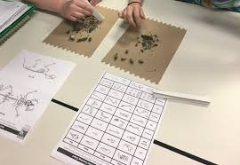 Owl Pellet Lab Hands On Science Lesson For Middle School Or