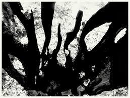 Αποτέλεσμα εικόνας για ΠΥΡΚΑΓΙΑ ΣΤΟΝ ΕΛΑΙΩΝΑ ΤΗΣ ΑΜΦΙΣΣΑΣ