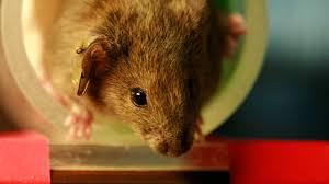avoiding animal testing the scientist magazine®