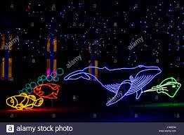 Fish Christmas Lights Christmas Lights Shaped Like A Whale And Fish Denver Zoo