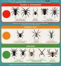 Tennessee Spider Identification Chart Identify These
