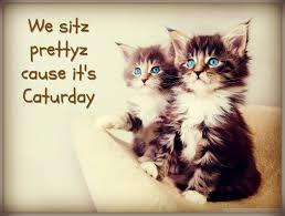 caay 2016 cute cat gifs funny