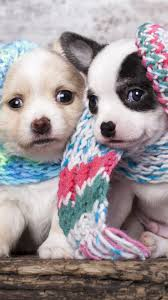 christmas puppy iphone wallpaper.  Iphone Cute Scarf Puppy Dog Couple IPhone 6 Wallpaper With Christmas Iphone Wallpaper P