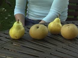 Do All Pear Trees Bear Fruit