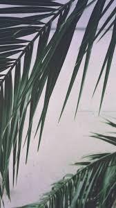 palm trees tumblr. 3. Palm Leaf Lockscreens Trees Tumblr K