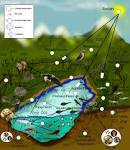 Images & Illustrations of biotic community