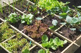 food garden bay ward bulletin