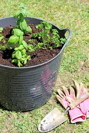 how to start a herb garden for less