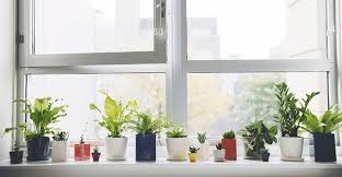 windowsill decoration creative decorating plant