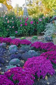 fall garden mums dahlias purple kale yne roehm this is so pretty