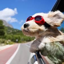doge wallpaper ipad. Modren Ipad Preview Wallpaper Dog Face Wind Glasses Throughout Doge Wallpaper Ipad O