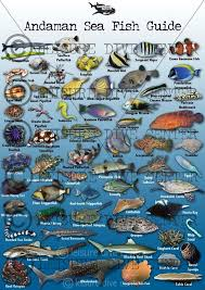 Australian Reef Fish Species Chart Fish Identification Guide Fish Fish Chart Marine Fish