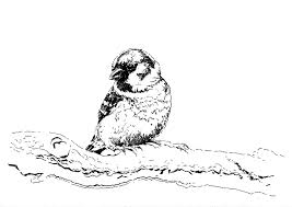 Get Free Coloring Pages Birds Pics