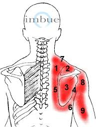 shoulder and neck pain on right side