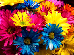 colored pictures of flowers.  Pictures On Colored Pictures Of Flowers D